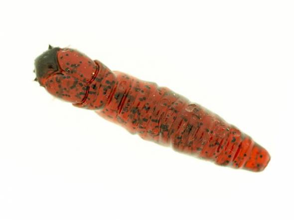 "Molix Caimano Worm 1,5"""